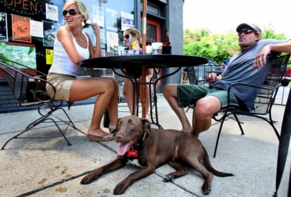 Nice The Commercial Appeal | For Those Who Want To Dine Out With Their Dogs, New